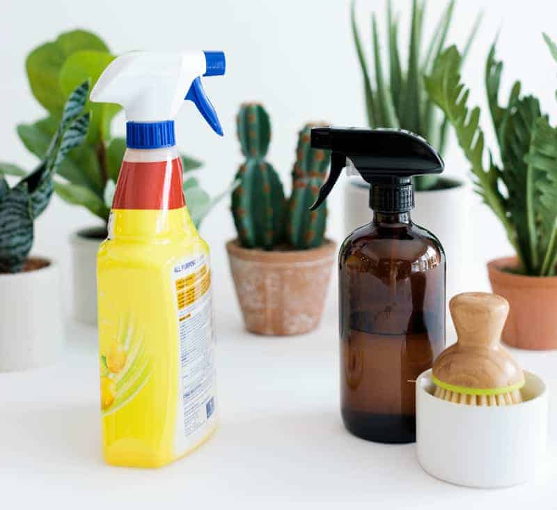 Bottle of cleaners set next to succulents