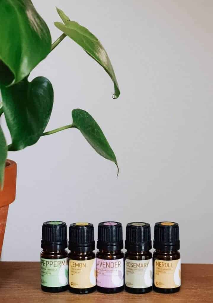 Rocky Mountain essential oils lined up next to plant.